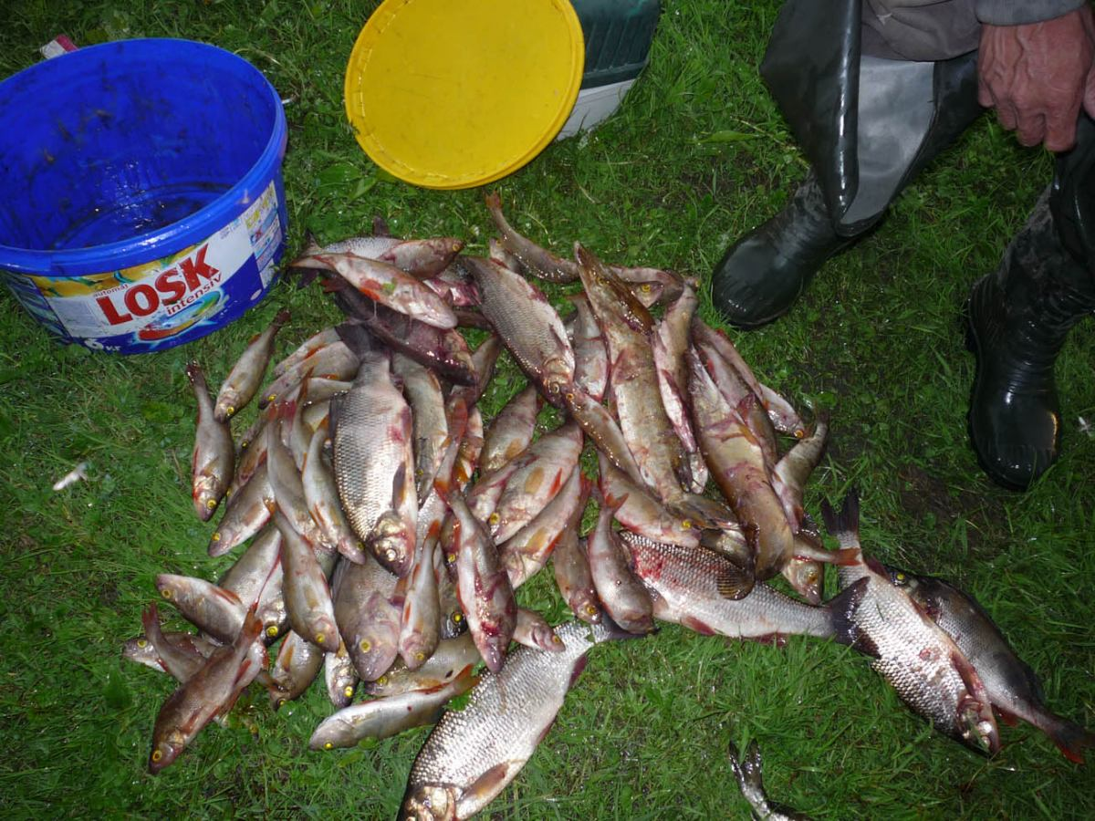 прогноз клева рыбы в куртамыше