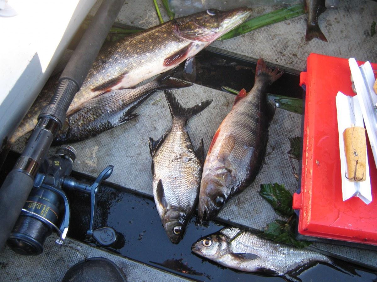 рыбалка в вологодской