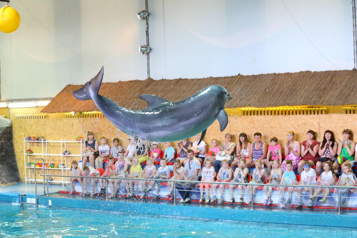 Работа в дельфинарий ярославль