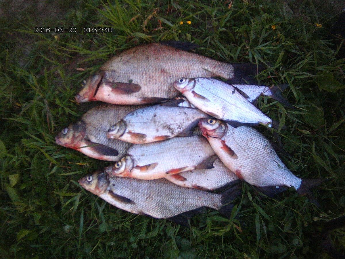рыбалка в вологодской области на кубене
